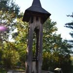 Radacinile si tulpina stejarului legendar din curtea bisericii din Borzesti