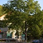 Slanic Moldova Sanatorium