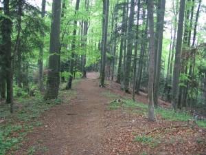 Traseu 300 de scari - Slanic Moldova